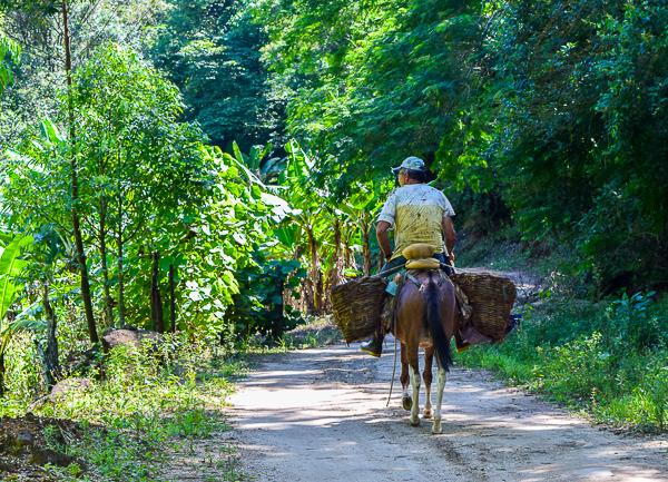 Rural Harmony Aldeia Velha